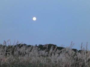お月見~♪