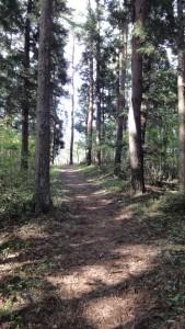 伊達小次郎君のお墓への山道(階段も無くなった)